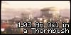 1.03 An Owl in a Thornbush (Un gufo nei rovi)